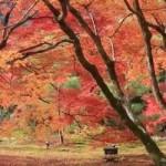嵐山 紅葉の時期の旅行案内!見ごろとプランについて。