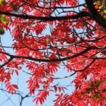 京都観光 紅葉の東福寺に行きたい!見ごろと混み具合は?