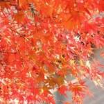 箱根観光で紅葉のスポットは?時期は?良いホテルあります。