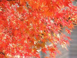 箱根観光 紅葉