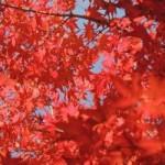 京都で紅葉の名所といえば?おすすめスポットとライトアップ