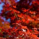 鎌倉の散策コース 紅葉の季節は?デートコースに江の島はいかが?