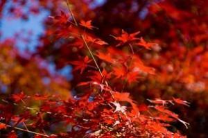鎌倉紅葉 デート