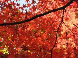 伊香保温泉紅葉