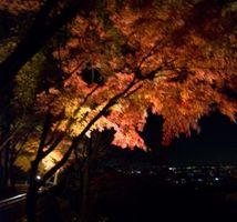 清水寺紅葉 ライトアップ