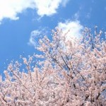 栗林公園の桜の開花予想は?ライトアップと見所はここ!