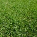 芝生の除草剤の安全性は?子供にも安心の除草剤は?