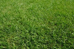 芝生 除草剤